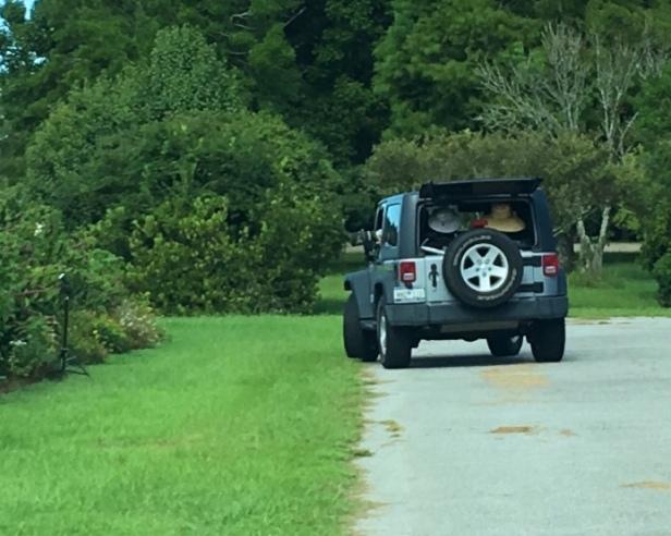 Hummingbird hunting in Jeep